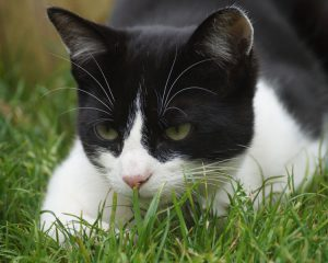 Black and white cat in grass