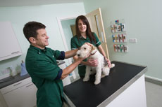Vet and nurse with dog