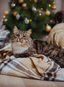 Christmas cat on blanket