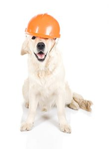 dog with hard hat